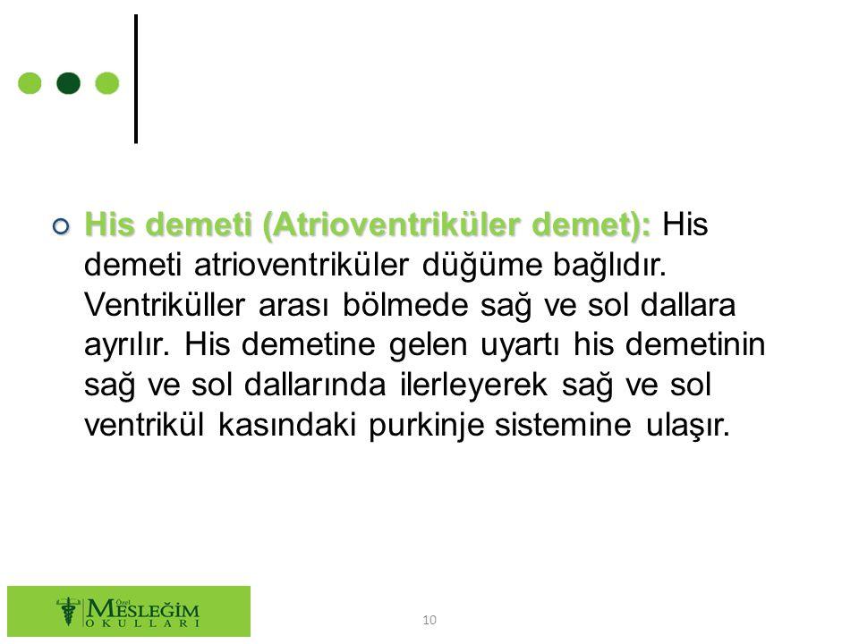○ His demeti (Atrioventriküler demet): ○ His demeti (Atrioventriküler demet): His demeti atrioventriküler düğüme bağlıdır.