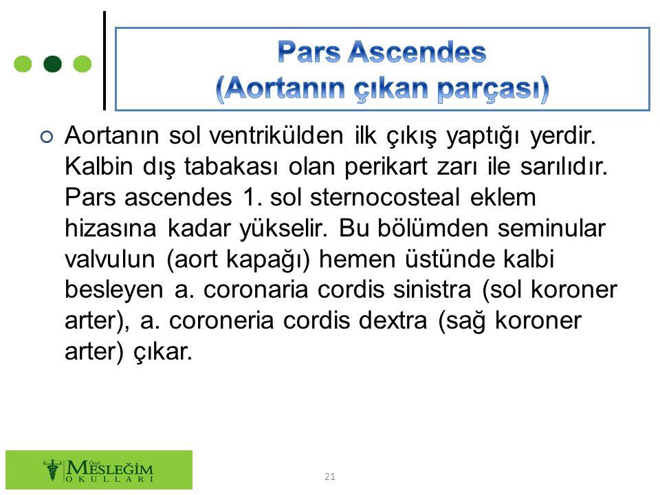 ○ Aortanın sol ventrikülden ilk çıkış yaptığı yerdir.