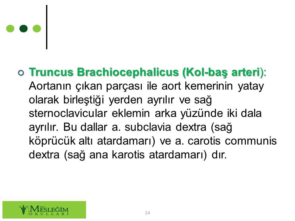 ○ Truncus Brachiocephalicus (Kol-baş arteri): ○ Truncus Brachiocephalicus (Kol-baş arteri): Aortanın çıkan parçası ile aort kemerinin yatay olarak birleştiği yerden ayrılır ve sağ sternoclavicular eklemin arka yüzünde iki dala ayrılır.