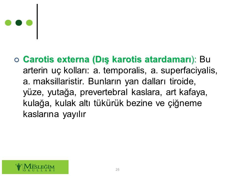 ○ Carotis externa (Dış karotis atardamarı): ○ Carotis externa (Dış karotis atardamarı): Bu arterin uç kolları: a.