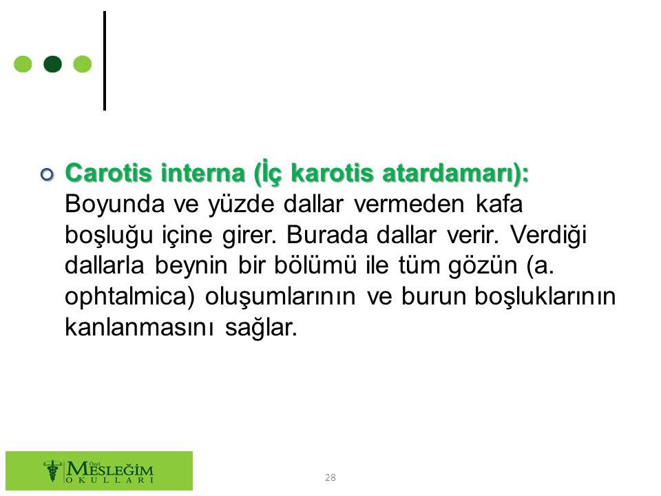 ○ Carotis interna (İç karotis atardamarı): ○ Carotis interna (İç karotis atardamarı): Boyunda ve yüzde dallar vermeden kafa boşluğu içine girer.
