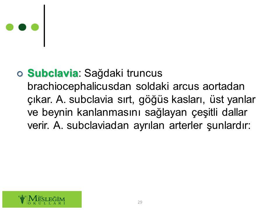 ○ Subclavia ○ Subclavia: Sağdaki truncus brachiocephalicusdan soldaki arcus aortadan çıkar.