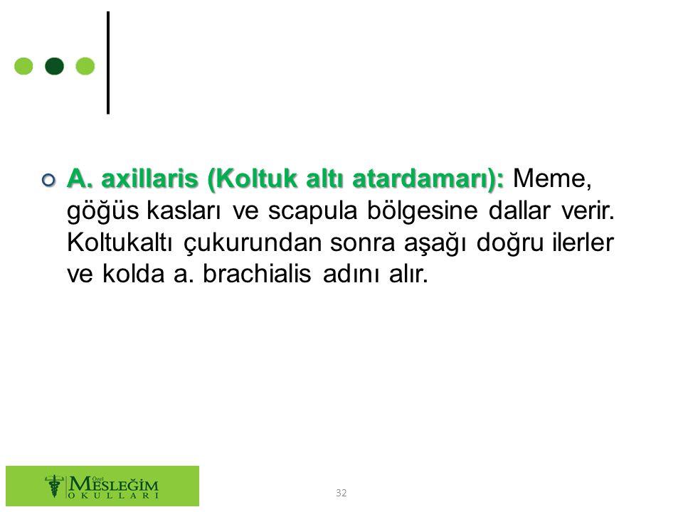 ○ A.axillaris (Koltuk altı atardamarı): ○ A.