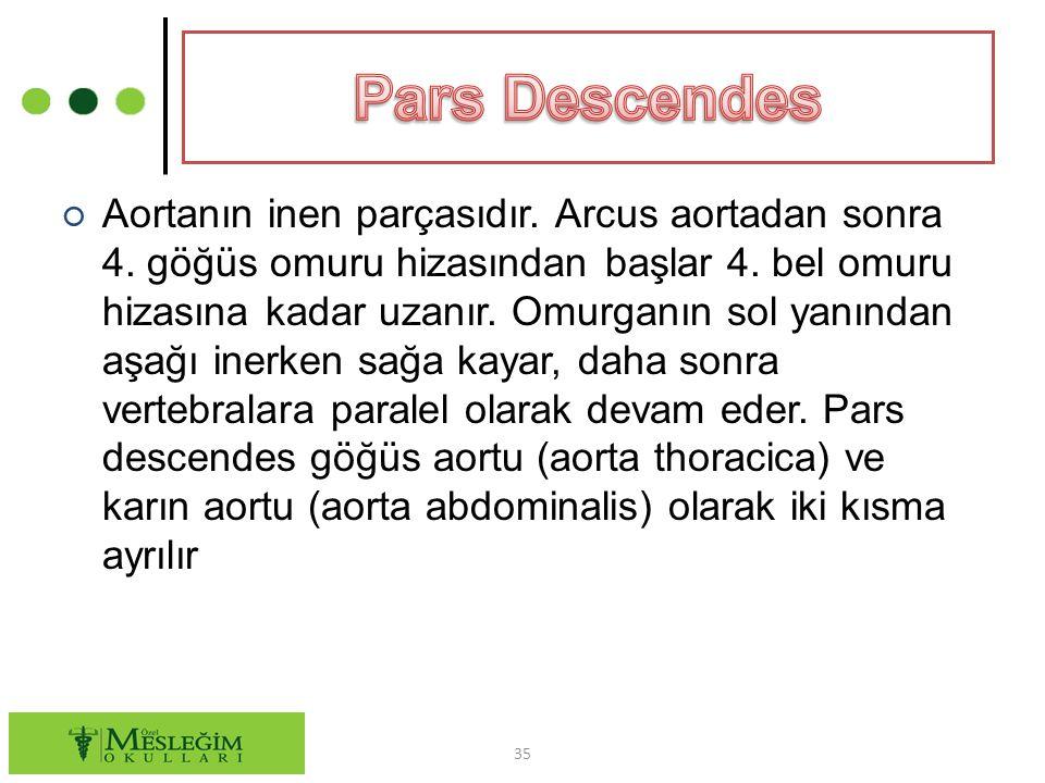 ○ Aortanın inen parçasıdır.Arcus aortadan sonra 4.