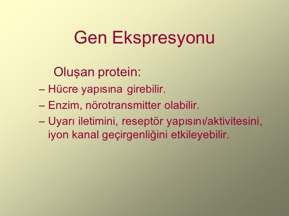 Gen Ekspresyonu Oluşan protein: –Hücre yapısına girebilir. –Enzim, nörotransmitter olabilir. –Uyarı iletimini, reseptör yapısını/aktivitesini, iyon ka
