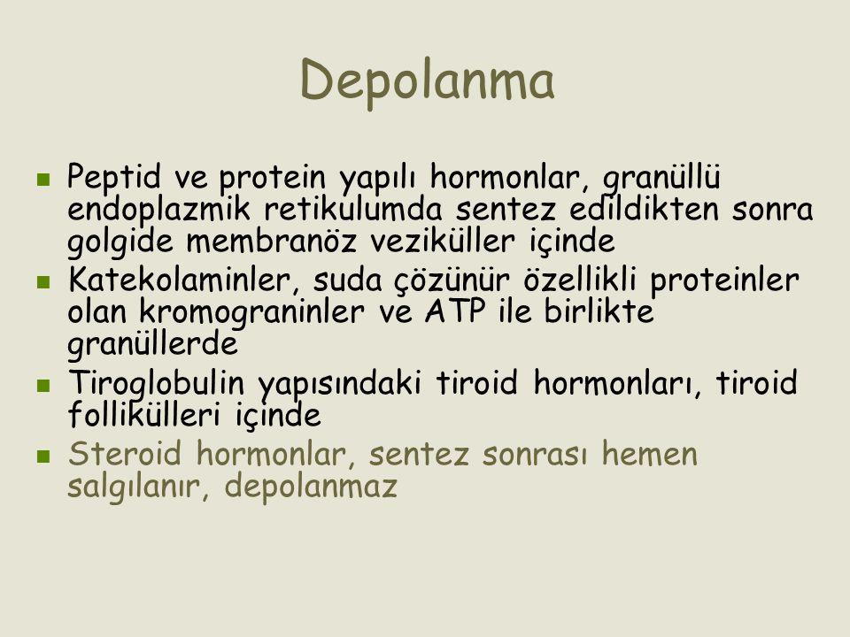 Depolanma Peptid ve protein yapılı hormonlar, granüllü endoplazmik retikulumda sentez edildikten sonra golgide membranöz veziküller içinde Katekolamin