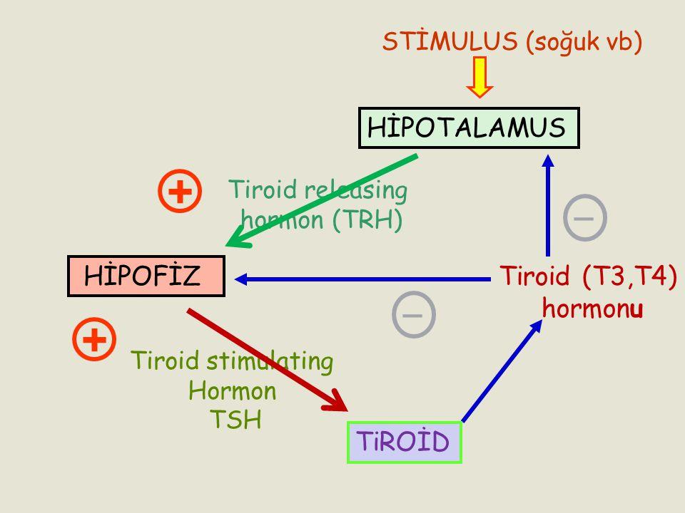 Tiroid (T3,T4) hormonu _ _ TiROİD Tiroid stimulating Hormon TSH + HİPOTALAMUS HİPOFİZ Tiroid releasing hormon (TRH) + STİMULUS (soğuk vb)