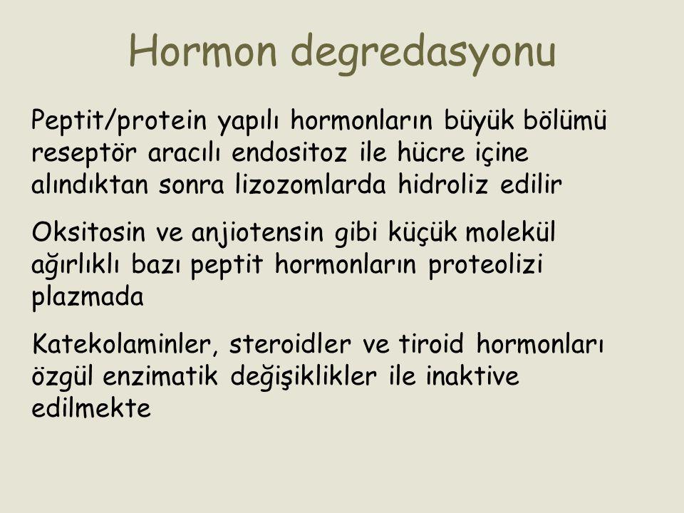 Hormon degredasyonu Peptit/protein yapılı hormonların büyük bölümü reseptör aracılı endositoz ile hücre içine alındıktan sonra lizozomlarda hidroliz e