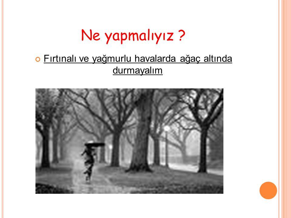 Ne yapmalıyız ? Fırtınalı ve yağmurlu havalarda ağaç altında durmayalım