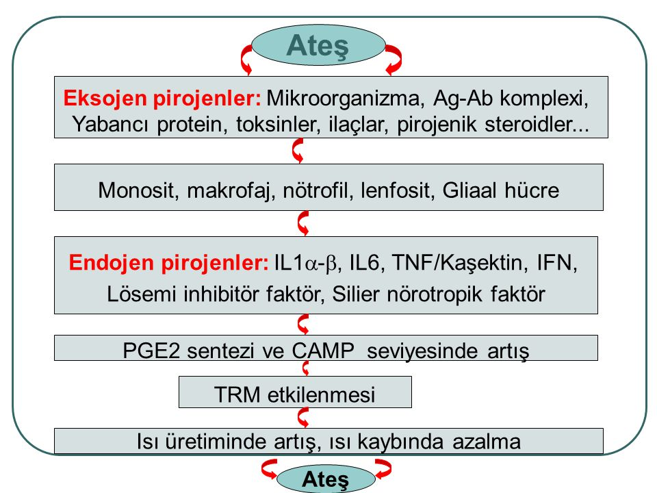 Tbc Fokal infeksiyon Kronik infeksiyon Kanser Subfebril Ateş
