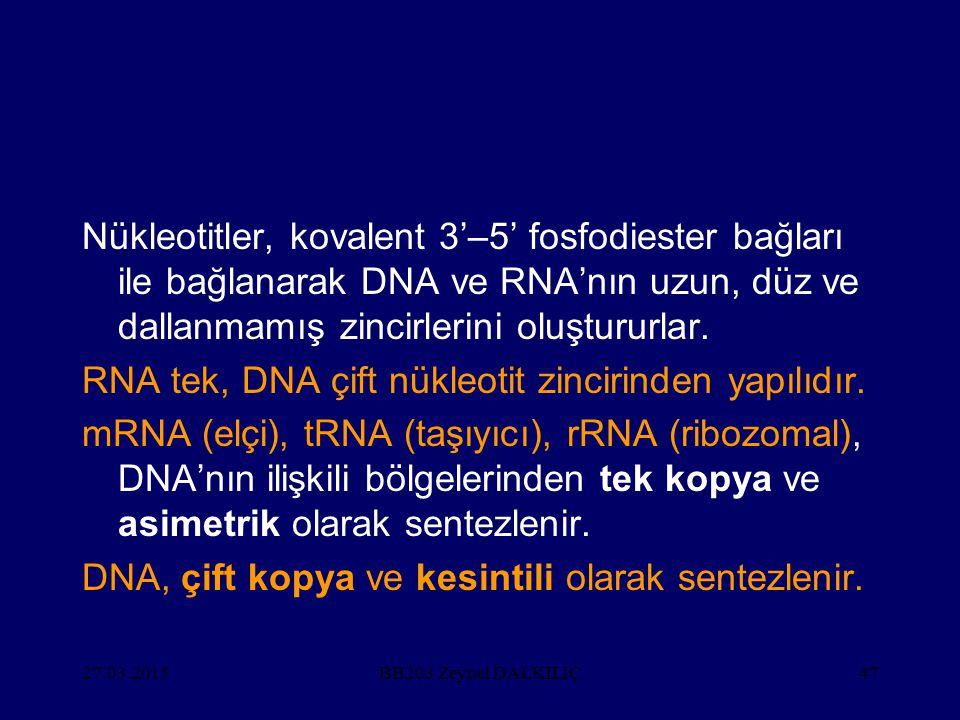 27.03.201547 Nükleotitler, kovalent 3'–5' fosfodiester bağları ile bağlanarak DNA ve RNA'nın uzun, düz ve dallanmamış zincirlerini oluştururlar. RNA t