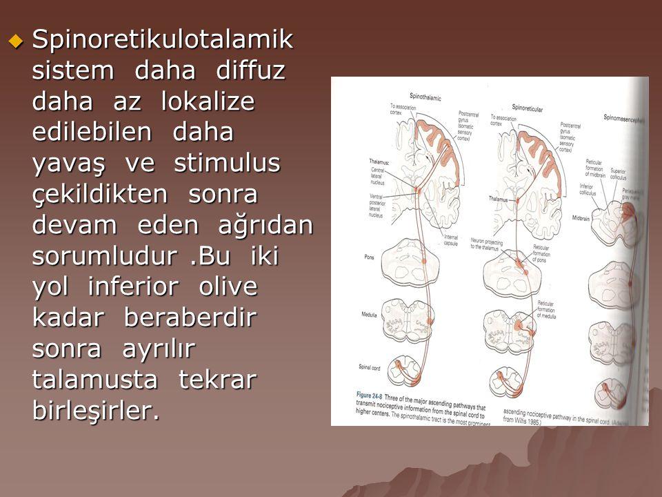  Spinoretikulotalamik sistem daha diffuz daha az lokalize edilebilen daha yavaş ve stimulus çekildikten sonra devam eden ağrıdan sorumludur.Bu iki yo