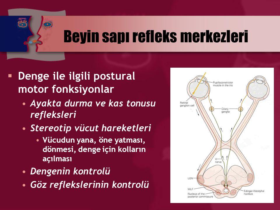 Beyin sapı refleks merkezleri  Denge ile ilgili postural motor fonksiyonlar Ayakta durma ve kas tonusu refleksleri Stereotip vücut hareketleri Vücudu