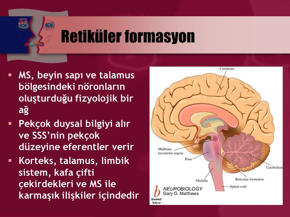 Retiküler formasyon  MS, beyin sapı ve talamus bölgesindeki nöronların oluşturduğu fizyolojik bir ağ  Pekçok duysal bilgiyi alır ve SSS'nin pekçok d
