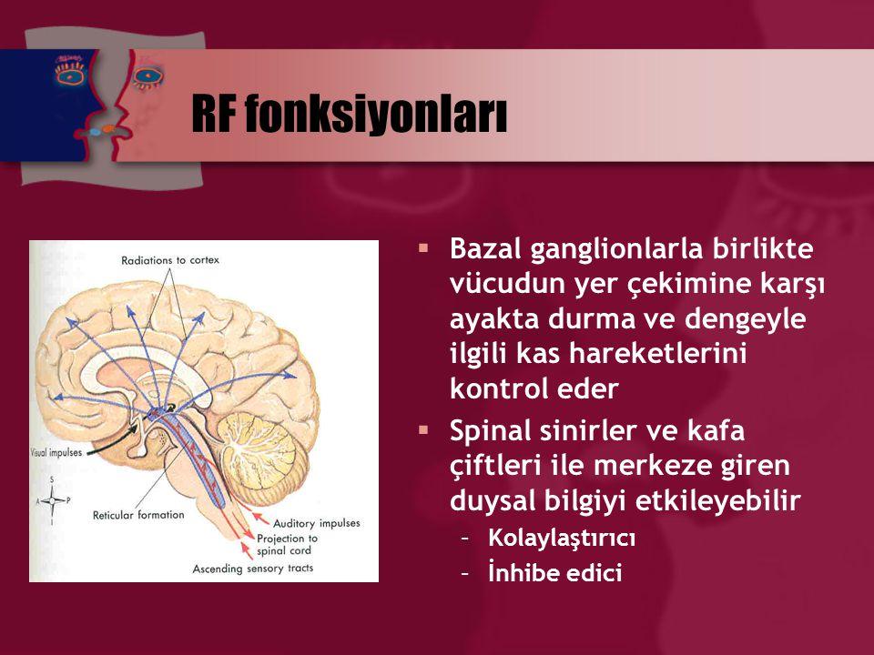 RF fonksiyonları  Bazal ganglionlarla birlikte vücudun yer çekimine karşı ayakta durma ve dengeyle ilgili kas hareketlerini kontrol eder  Spinal sin