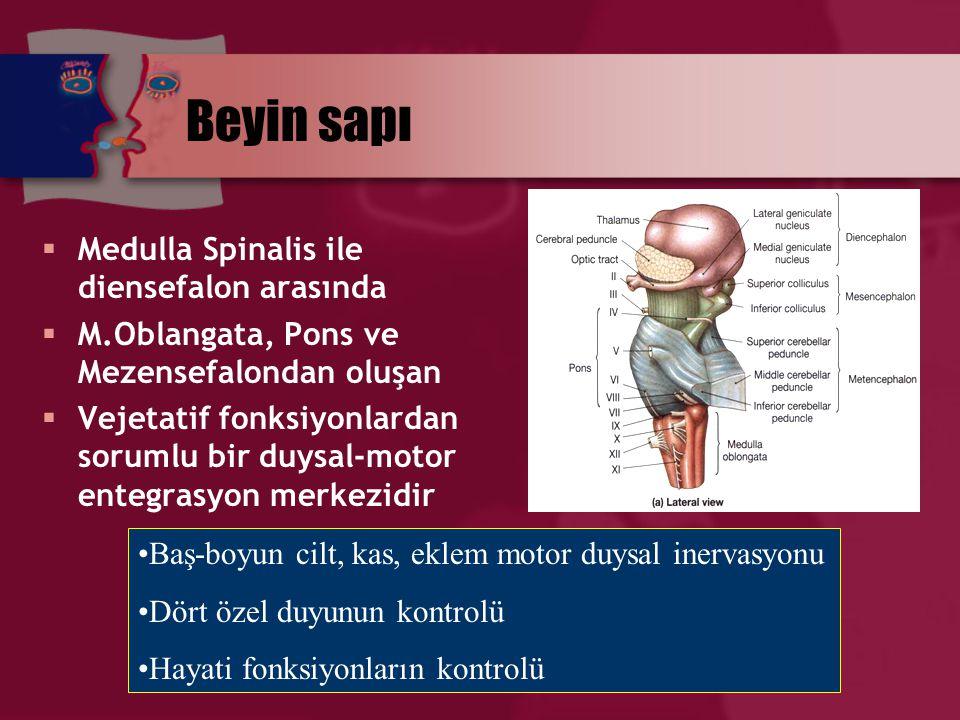 Beyin sapı  Medulla Spinalis ile diensefalon arasında  M.Oblangata, Pons ve Mezensefalondan oluşan  Vejetatif fonksiyonlardan sorumlu bir duysal-mo