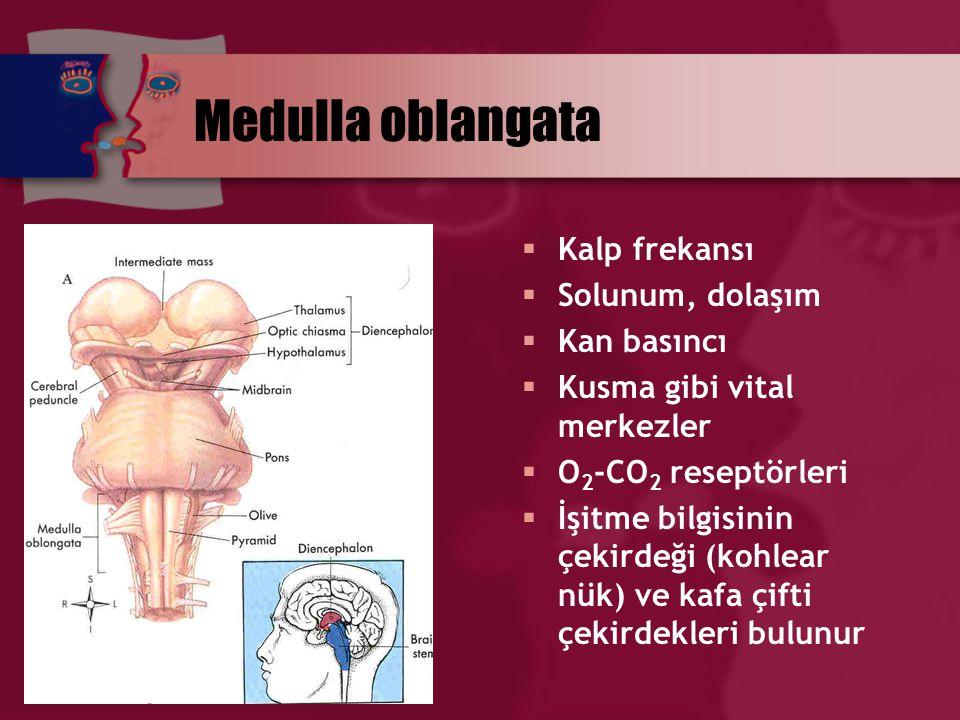 Retiküler formasyon  MS, beyin sapı ve talamus bölgesindeki nöronların oluşturduğu fizyolojik bir ağ  Pekçok duysal bilgiyi alır ve SSS'nin pekçok düzeyine eferentler verir  Korteks, talamus, limbik sistem, kafa çifti çekirdekleri ve MS ile karmaşık ilişkiler içindedir
