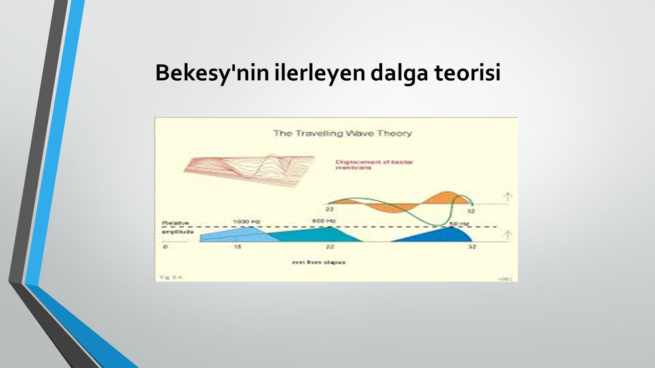 Bekesy'nin ilerleyen dalga teorisi