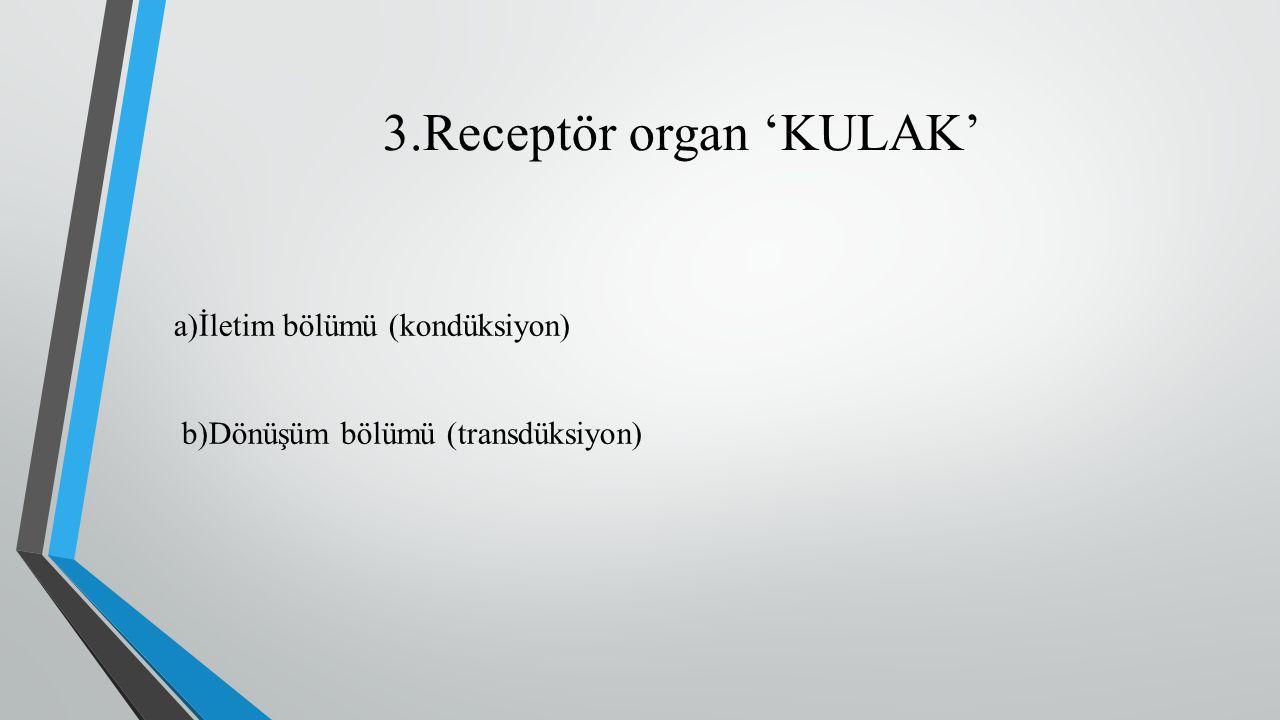 3.Receptör organ 'KULAK' a)İletim bölümü (kondüksiyon) b)Dönüşüm bölümü (transdüksiyon)