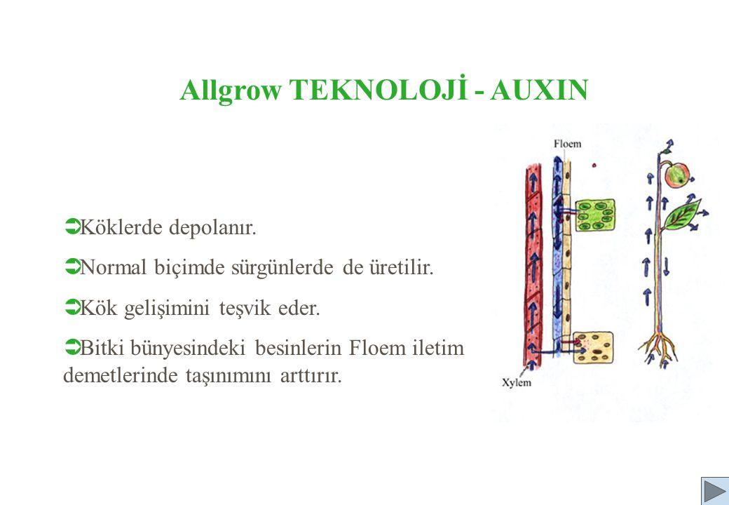 Allgrow TEKNOLOJİ - AUXIN  Köklerde depolanır.  Normal biçimde sürgünlerde de üretilir.  Kök gelişimini teşvik eder.  Bitki bünyesindeki besinleri
