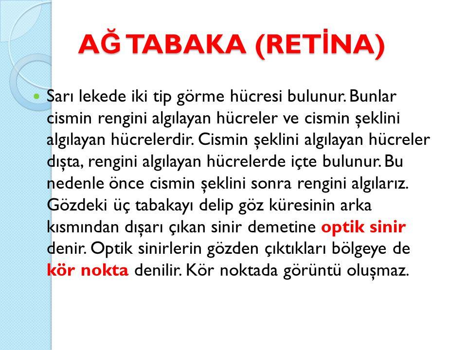 A Ğ TABAKA (RET İ NA) Sarı lekede iki tip görme hücresi bulunur.