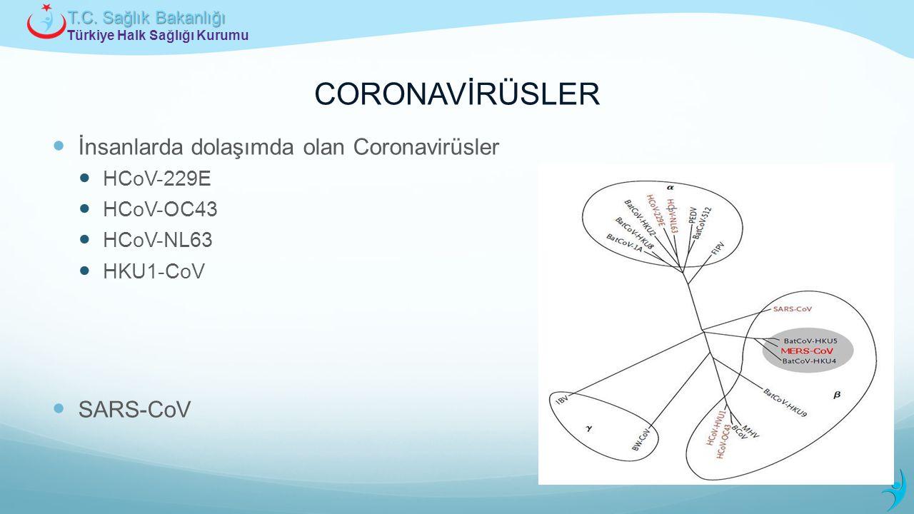 Türkiye Halk Sağlığı Kurumu T.C. Sağlık Bakanlığı CORONAVİRÜSLER İnsanlarda dolaşımda olan Coronavirüsler HCoV-229E HCoV-OC43 HCoV-NL63 HKU1-CoV SARS-
