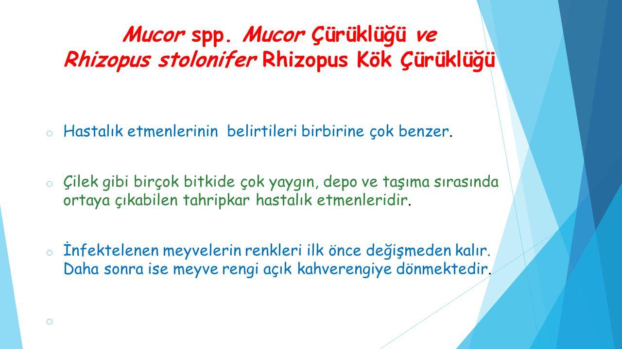 Mucor spp. Mucor Çürüklüğü ve Rhizopus stolonifer Rhizopus Kök Çürüklüğü o Hastalık etmenlerinin belirtileri birbirine çok benzer. o Çilek gibi birçok