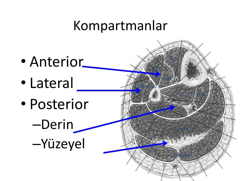 Kompartmanlar Anterior Lateral Posterior – Derin – Yüzeyel EDL FDLTP Gastroc Soleus TA EHL FHL Peroneu s