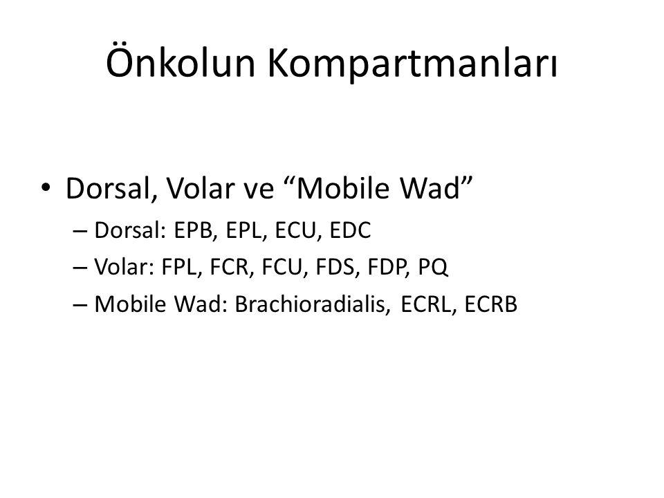 """Önkolun Kompartmanları Dorsal, Volar ve """"Mobile Wad"""" – Dorsal: EPB, EPL, ECU, EDC – Volar: FPL, FCR, FCU, FDS, FDP, PQ – Mobile Wad: Brachioradialis,"""