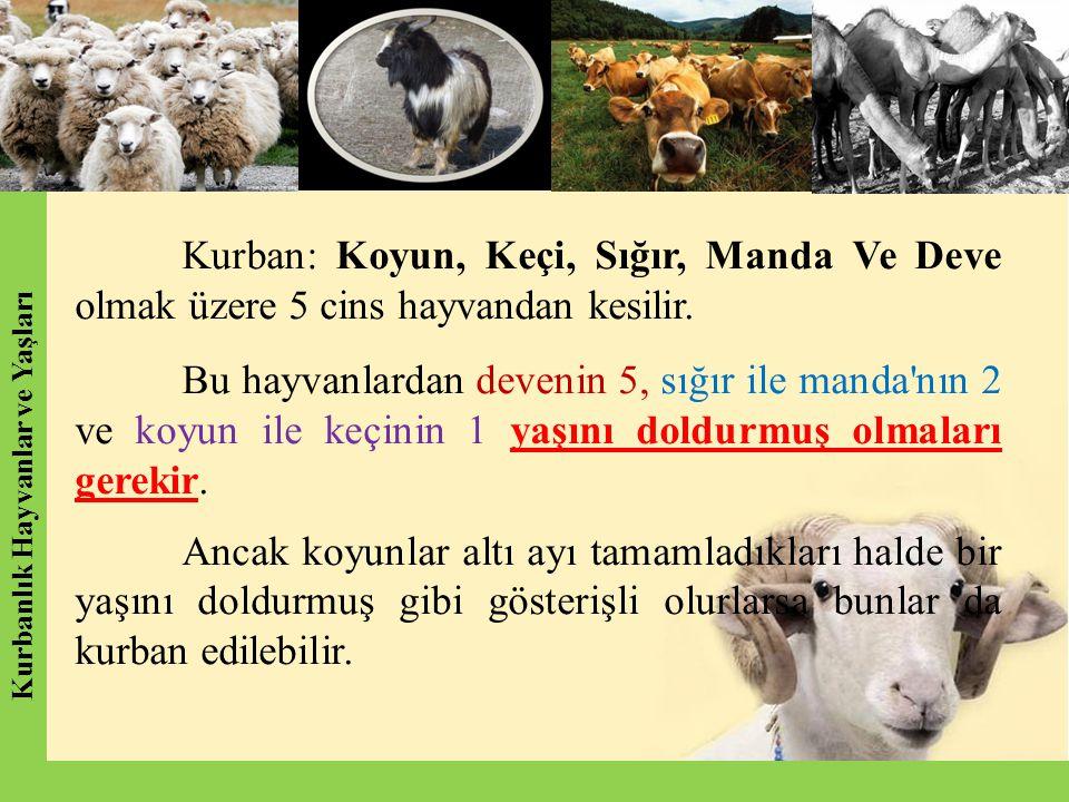 Kurban: Koyun, Keçi, Sığır, Manda Ve Deve olmak üzere 5 cins hayvandan kesilir. Bu hayvanlardan devenin 5, sığır ile manda'nın 2 ve koyun ile keçinin