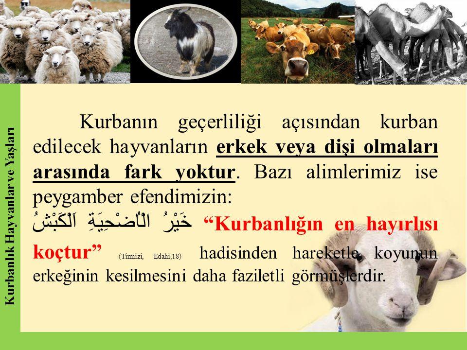 Kurbanın geçerliliği açısından kurban edilecek hayvanların erkek veya dişi olmaları arasında fark yoktur. Bazı alimlerimiz ise peygamber efendimizin:
