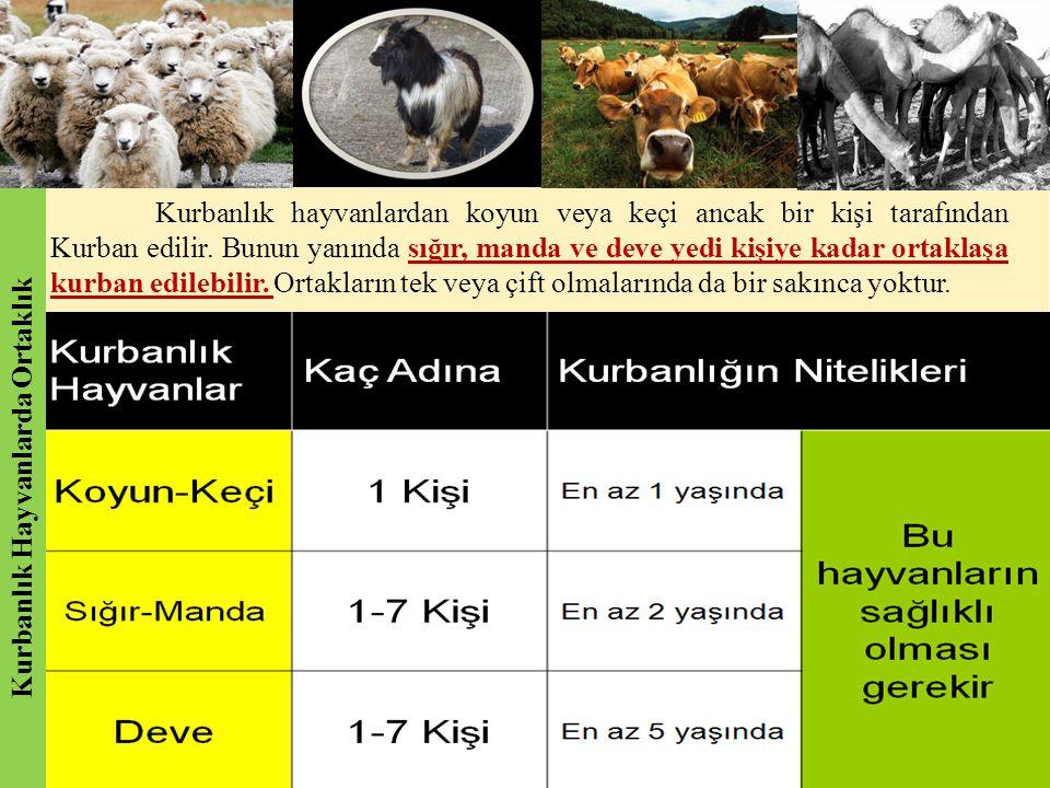 Kurbanlık hayvanlardan koyun veya keçi ancak bir kişi tarafından Kurban edilir. Bunun yanında sığır, manda ve deve yedi kişiye kadar ortaklaşa kurban