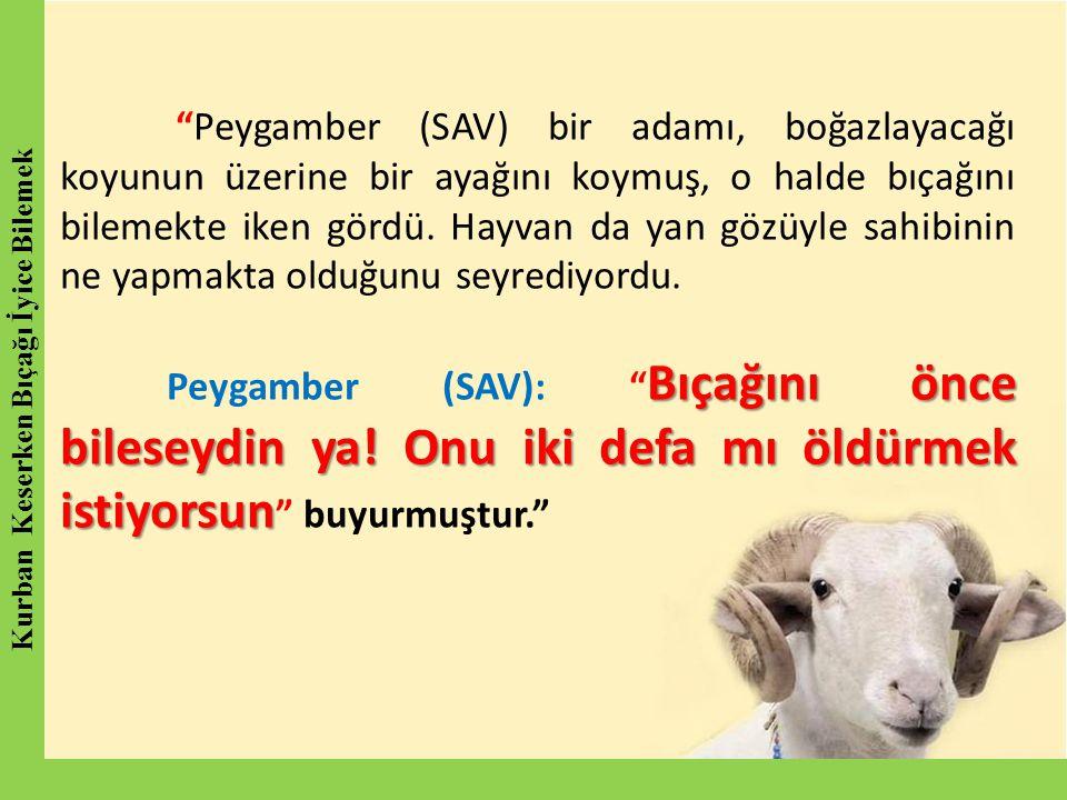 """""""Peygamber (SAV) bir adamı, boğazlayacağı koyunun üzerine bir ayağını koymuş, o halde bıçağını bilemekte iken gördü. Hayvan da yan gözüyle sahibinin n"""