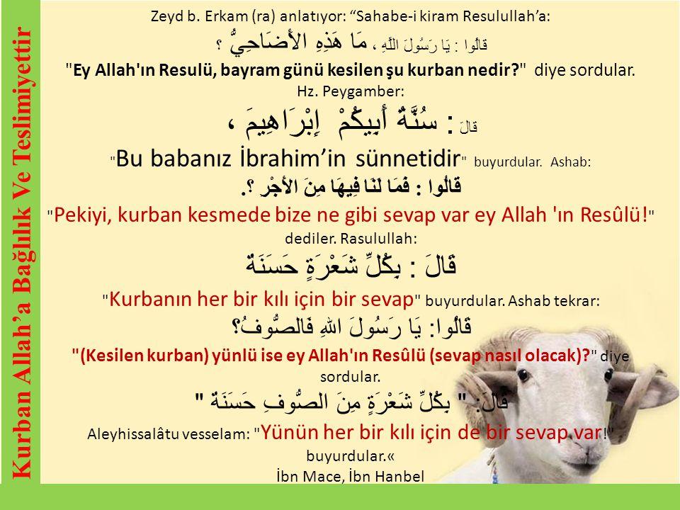 """Kurban Allah'a Bağlılık Ve Teslimiyettir Zeyd b. Erkam (ra) anlatıyor: """"Sahabe-i kiram Resulullah'a: قَالُوا : يَا رَسُولَ اللَّهِ ، مَا هَذِهِ الأَضَ"""