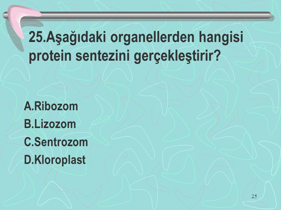 25 25.Aşağıdaki organellerden hangisi protein sentezini gerçekleştirir? A.Ribozom B.Lizozom C.Sentrozom D.Kloroplast