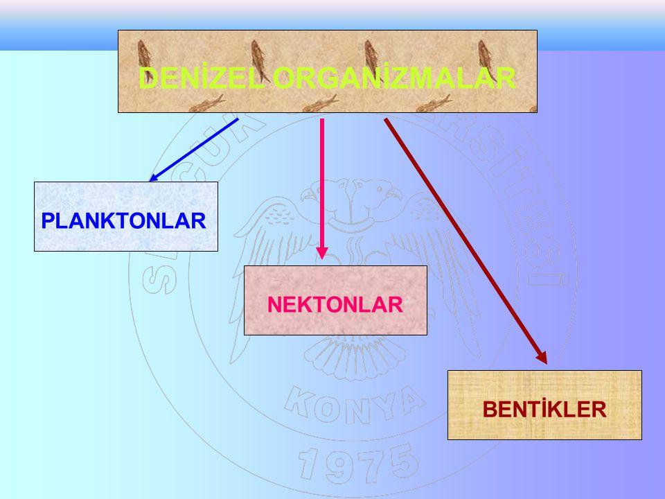 DENİZEL ORGANİZMALAR PLANKTONLAR NEKTONLAR BENTİKLER