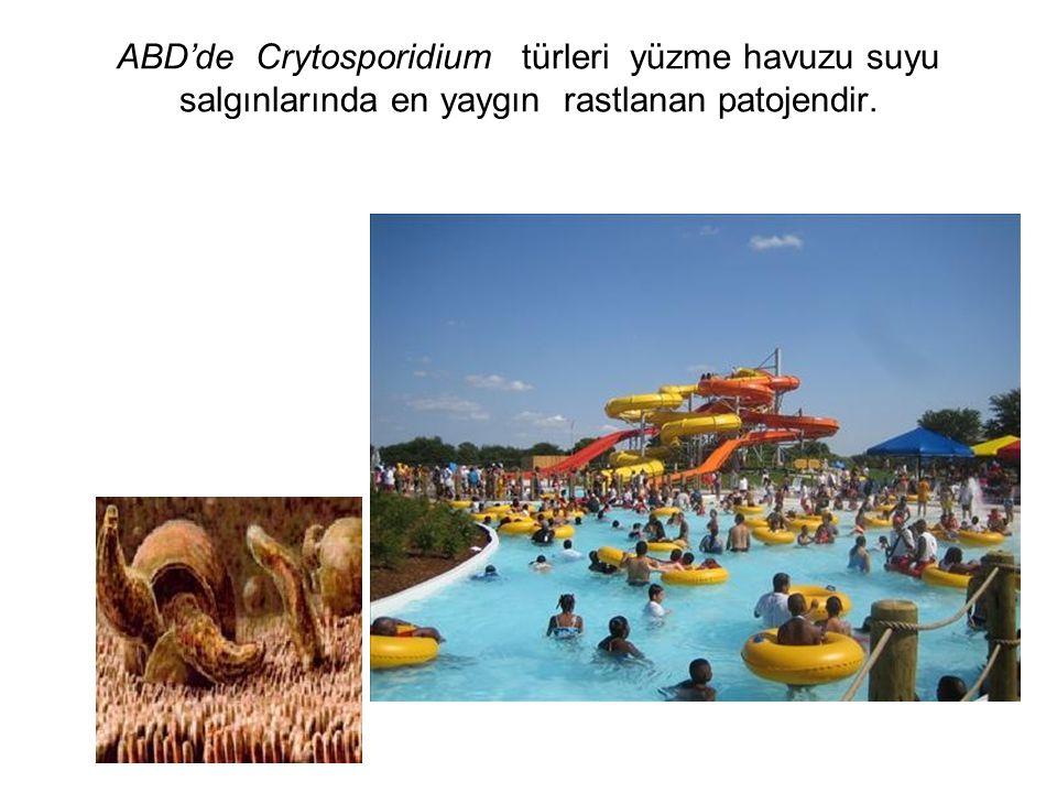 ABD'de Crytosporidium türleri yüzme havuzu suyu salgınlarında en yaygın rastlanan patojendir.