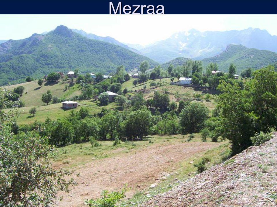 Mezraa