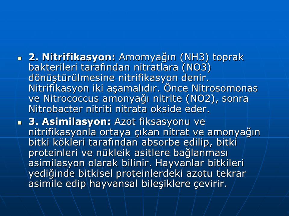 2. Nitrifikasyon: Amomyağın (NH3) toprak bakterileri tarafından nitratlara (NO3) dönüştürülmesine nitrifikasyon denir. Nitrifikasyon iki aşamalıdır. Ö