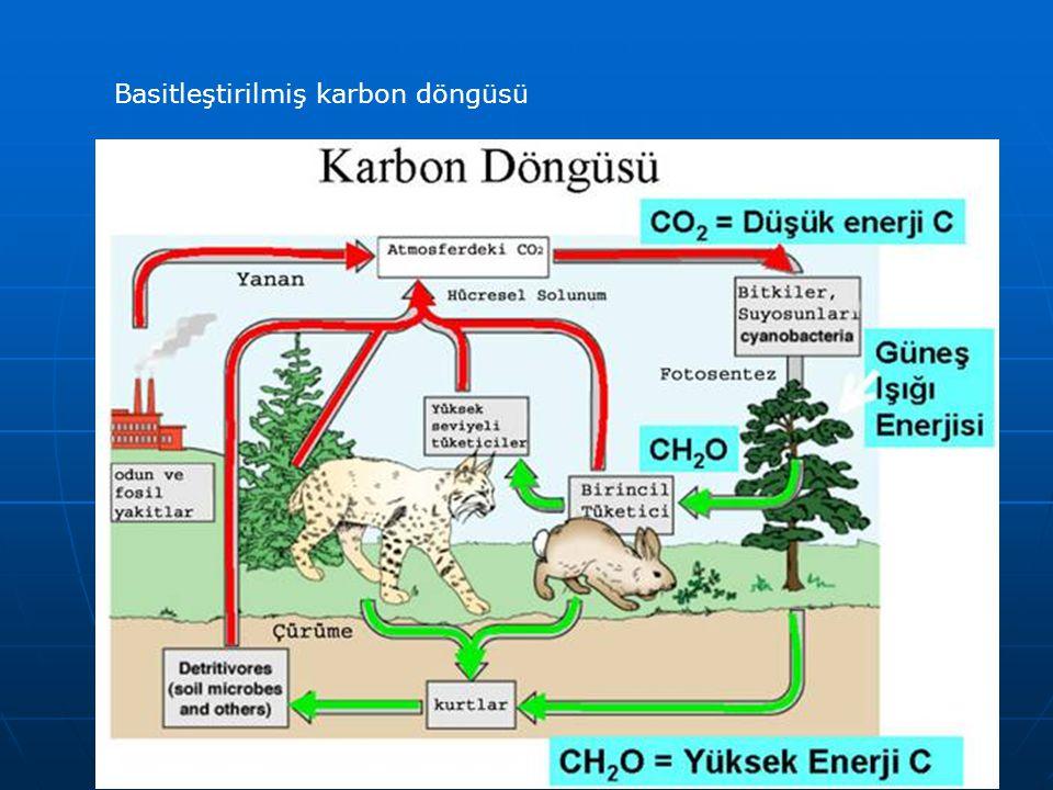 Karbon Döngüsü ve Küresel Isınma İnsan aktivitesi karbon döngüsündeki dengeyi bozmuştur.