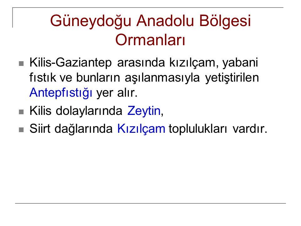 Güneydoğu Anadolu Bölgesi Ormanları Kilis-Gaziantep arasında kızılçam, yabani fıstık ve bunların aşılanmasıyla yetiştirilen Antepfıstığı yer alır. Kil