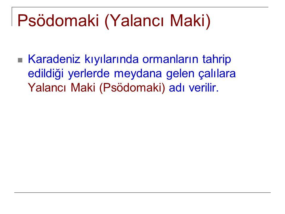 Psödomaki (Yalancı Maki) Karadeniz kıyılarında ormanların tahrip edildiği yerlerde meydana gelen çalılara Yalancı Maki (Psödomaki) adı verilir.