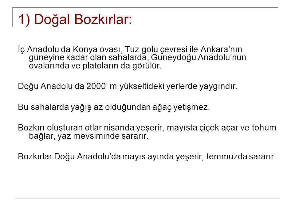 1) Doğal Bozkırlar: İç Anadolu da Konya ovası, Tuz gölü çevresi ile Ankara'nın güneyine kadar olan sahalarda, Güneydoğu Anadolu'nun ovalarında ve plat