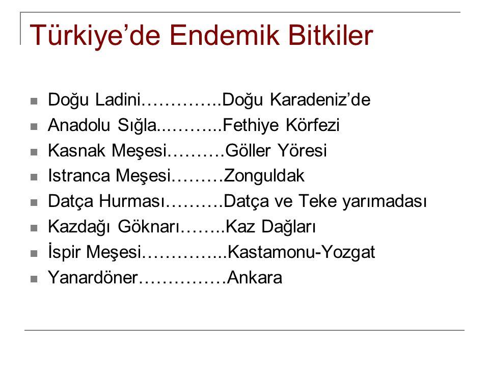 Soru  Türkiye de yüksek dağ çayırları 1800 metreden daha yüksek alanlarda görülür.
