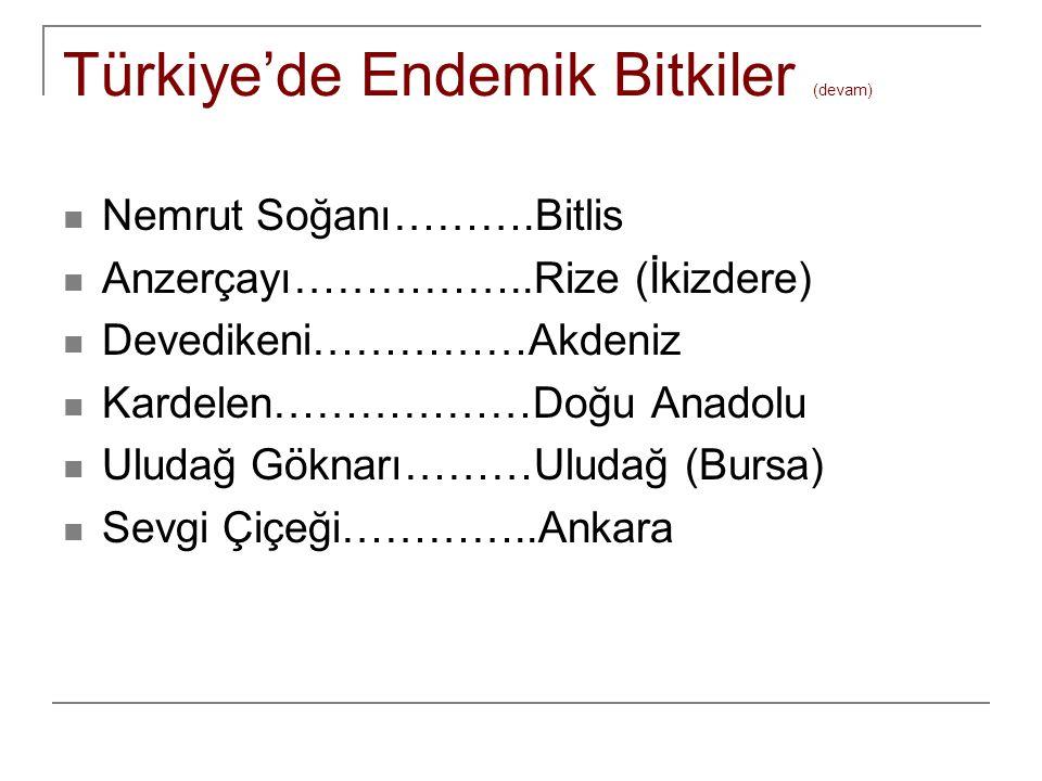 Türkiye'de Endemik Bitkiler (devam) Nemrut Soğanı……….Bitlis Anzerçayı……………..Rize (İkizdere) Devedikeni……………Akdeniz Kardelen………………Doğu Anadolu Uludağ G