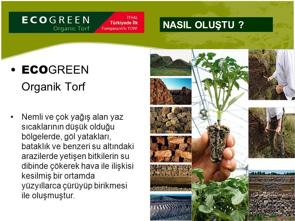 ECO GREEN Organik Torf Nemli ve çok yağış alan yaz sıcaklarının düşük olduğu bölgelerde, göl yatakları, bataklık ve benzeri su altındaki arazilerde ye