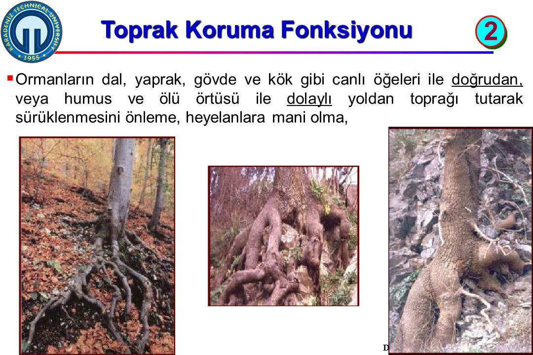 İstanbul, 2007 DSİ, 10 Şubat 2011, Trabzon, ©EZB  Ormanların dal, yaprak, gövde ve kök gibi canlı öğeleri ile doğrudan, veya humus ve ölü örtüsü ile dolaylı yoldan toprağı tutarak sürüklenmesini önleme, heyelanlara mani olma, Toprak Koruma Fonksiyonu 2