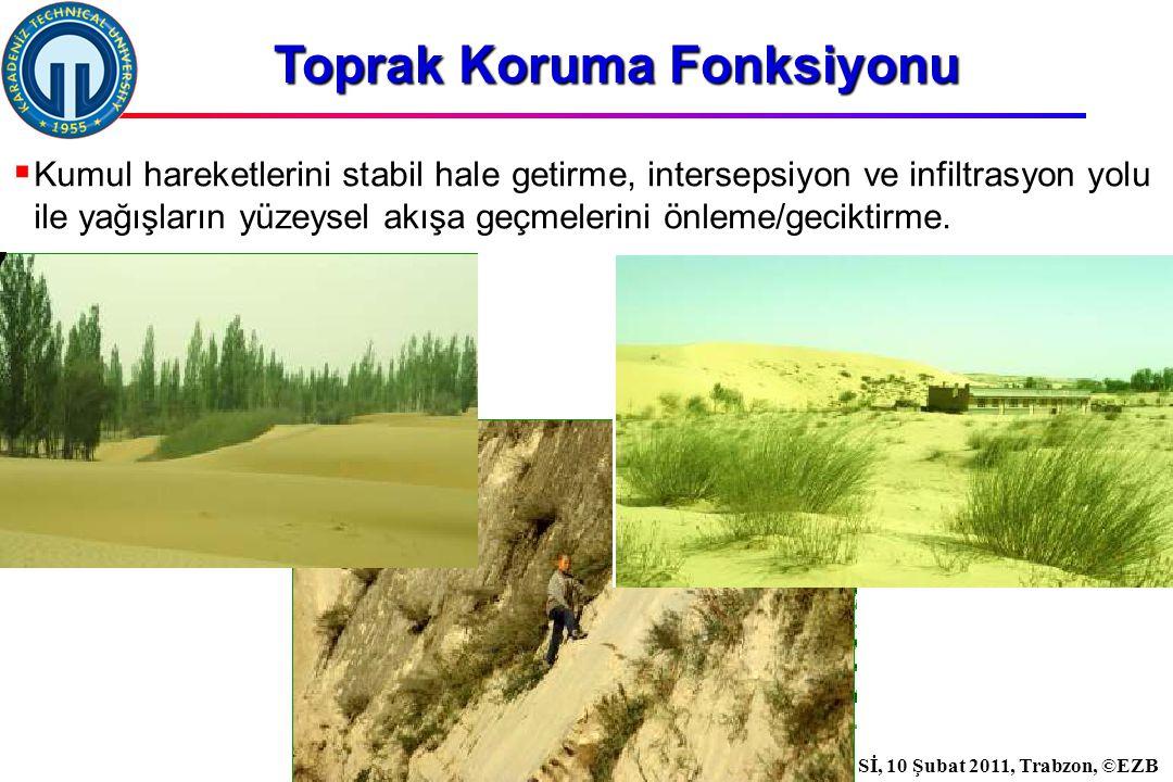 İstanbul, 2007 DSİ, 10 Şubat 2011, Trabzon, ©EZB  Kumul hareketlerini stabil hale getirme, intersepsiyon ve infiltrasyon yolu ile yağışların yüzeysel akışa geçmelerini önleme/geciktirme.