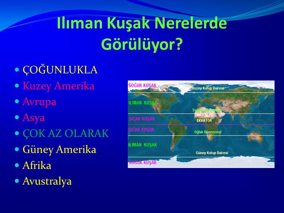 Ilıman Kuşak Nerelerde Görülüyor? ÇOĞUNLUKLA Kuzey Amerika Avrupa Asya ÇOK AZ OLARAK Güney Amerika Afrika Avustralya