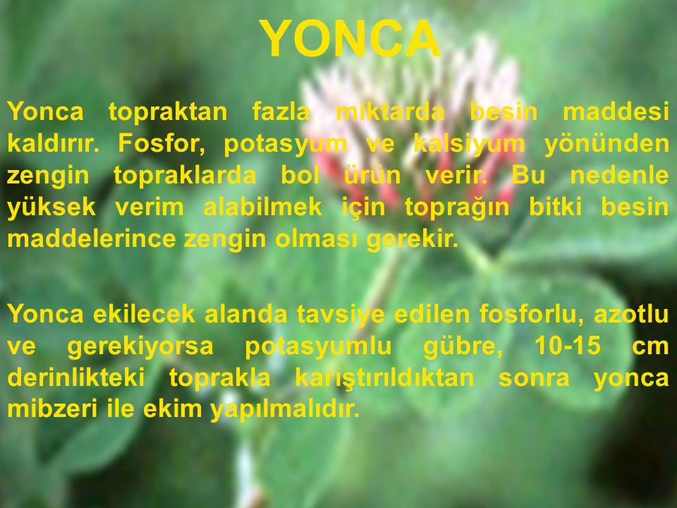 YONCA Yonca topraktan fazla miktarda besin maddesi kaldırır. Fosfor, potasyum ve kalsiyum yönünden zengin topraklarda bol ürün verir. Bu nedenle yükse